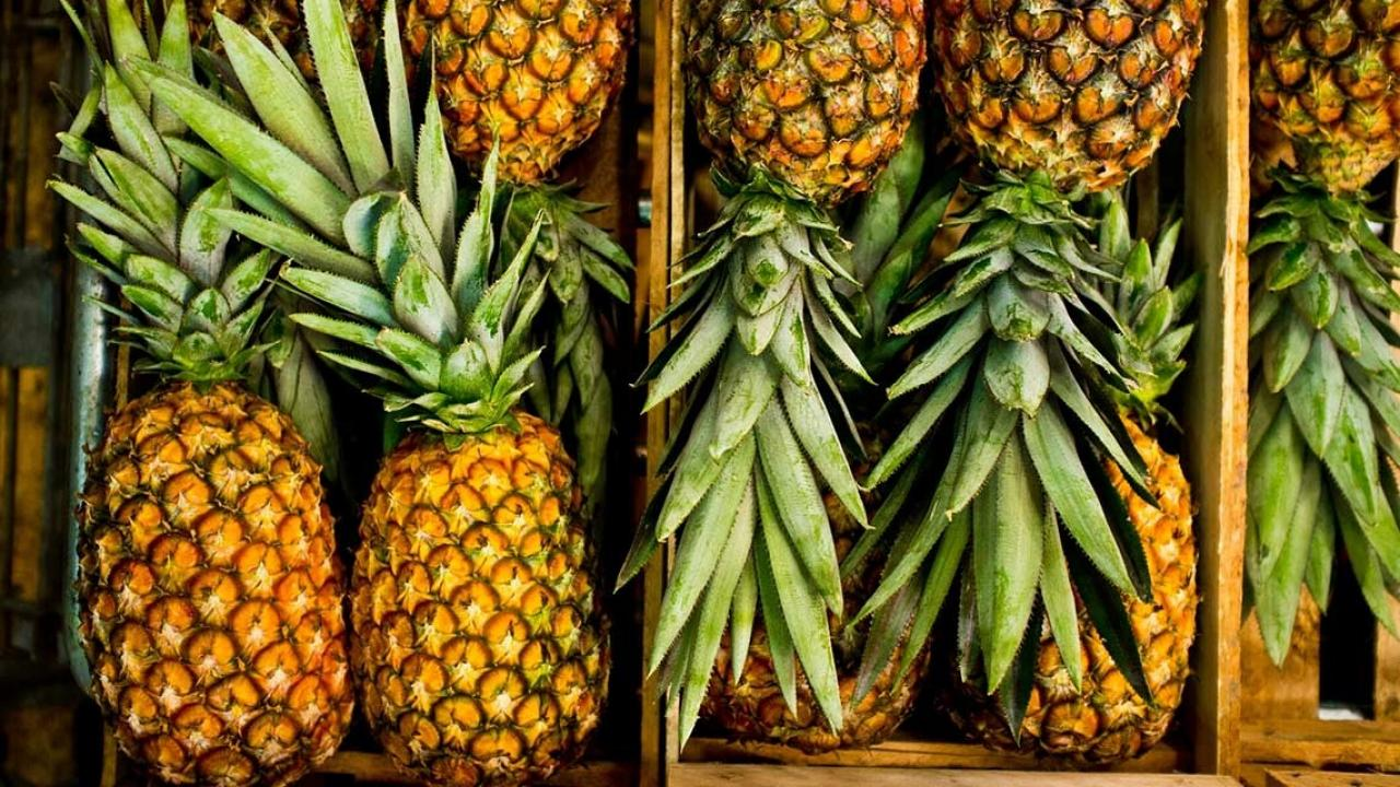 Pineapple Christmas Trees For Those Who Want To Save