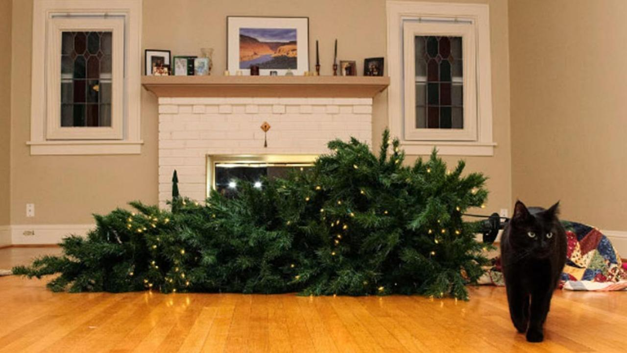 10 Times Pets Ruined Christmas